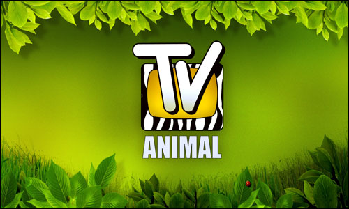 http://multigolb.files.wordpress.com/2009/12/tv-animal.jpg